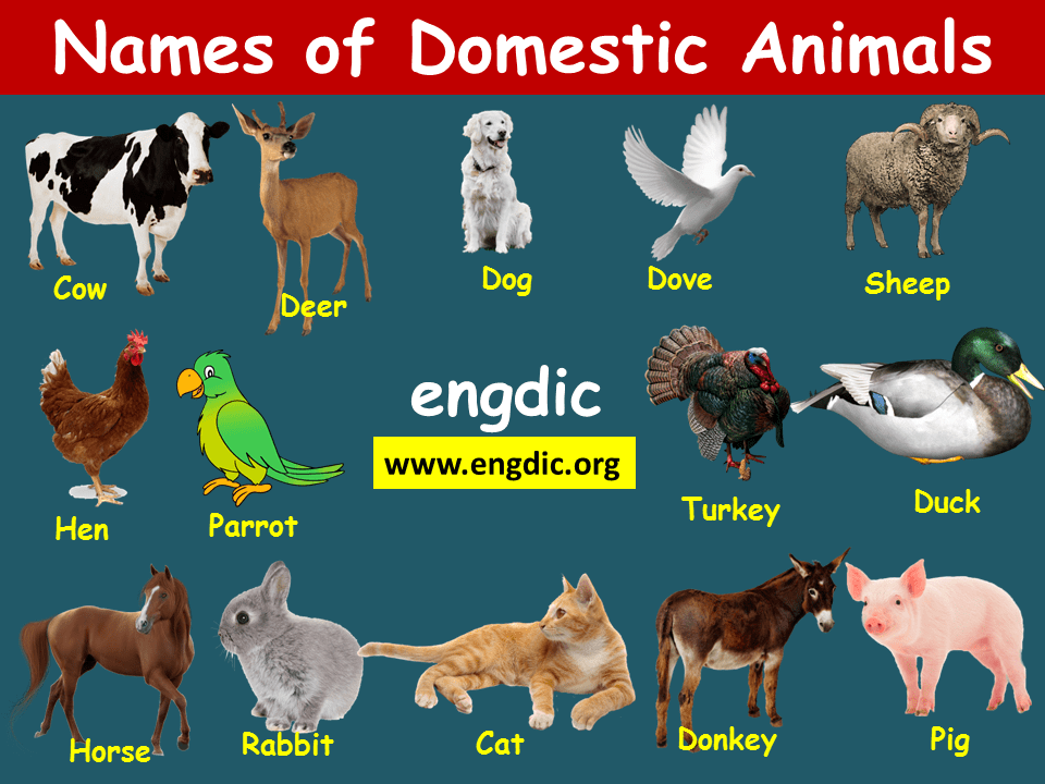 domestic animals pictures with names