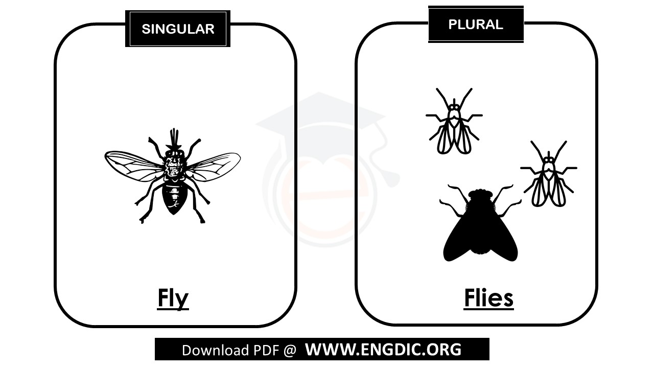plural of fly