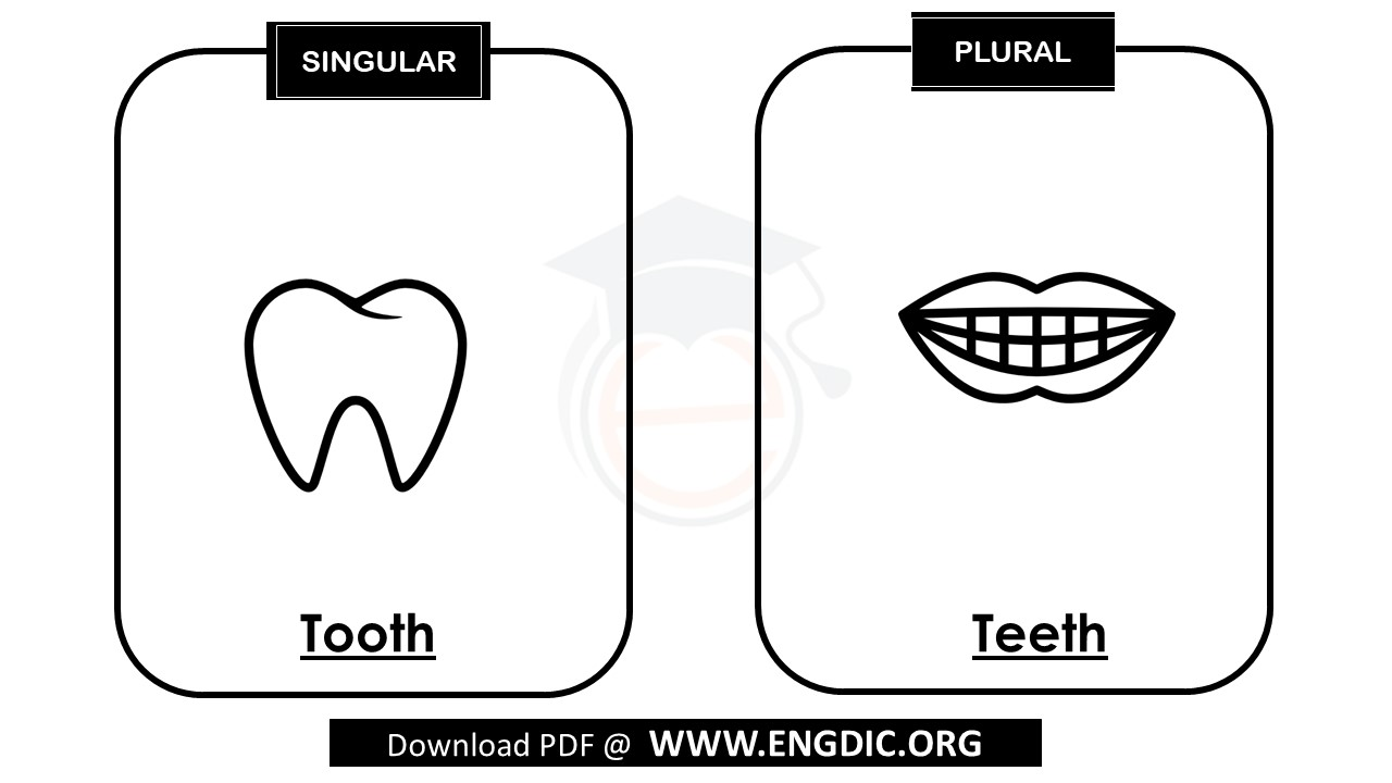plural of tooth