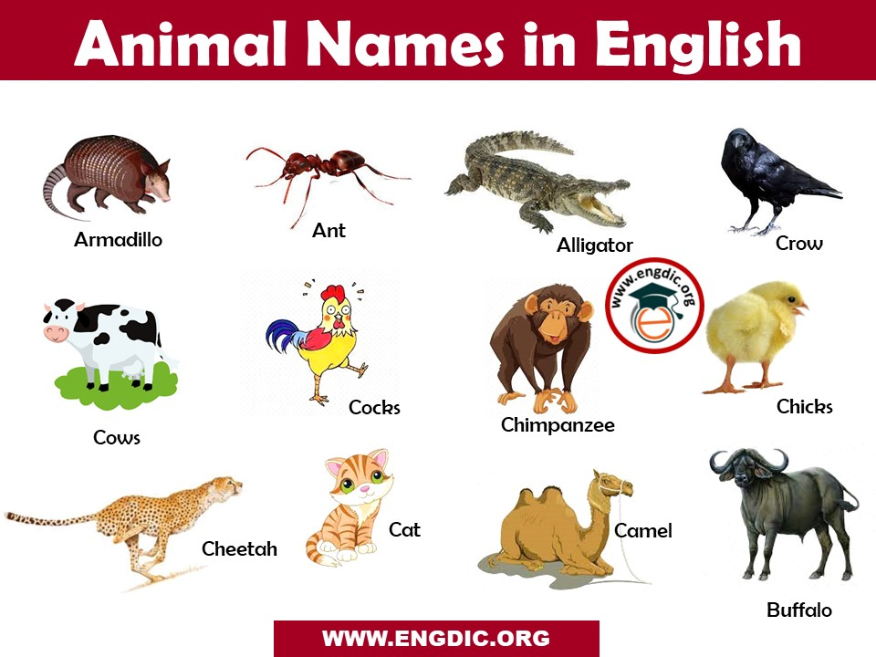 Animals Name List in English A to Z