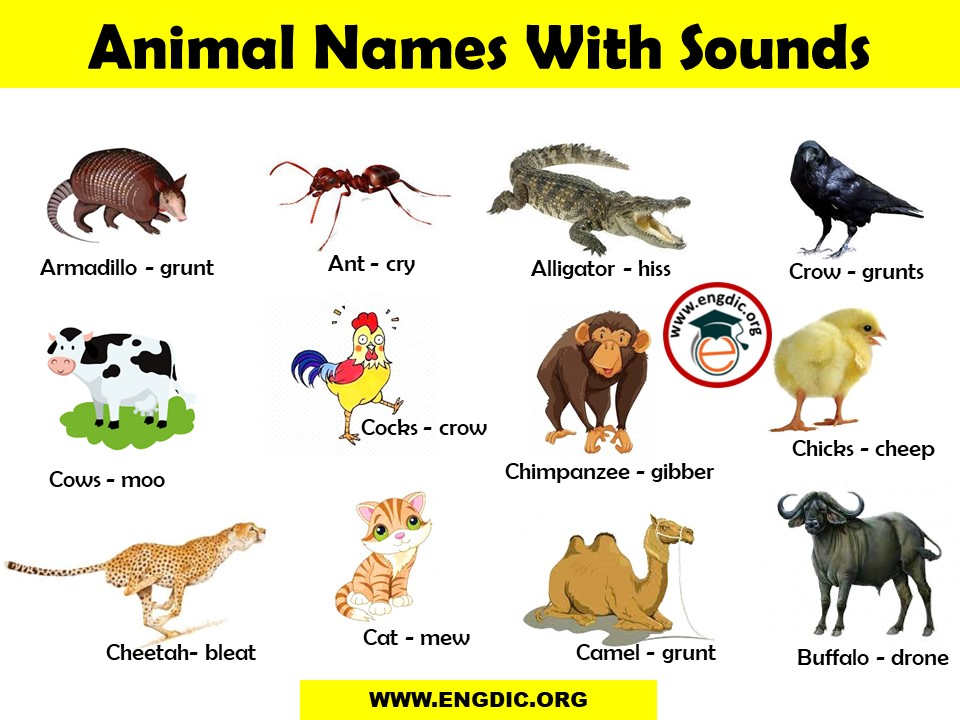 List of Animal Sounds from A to Z