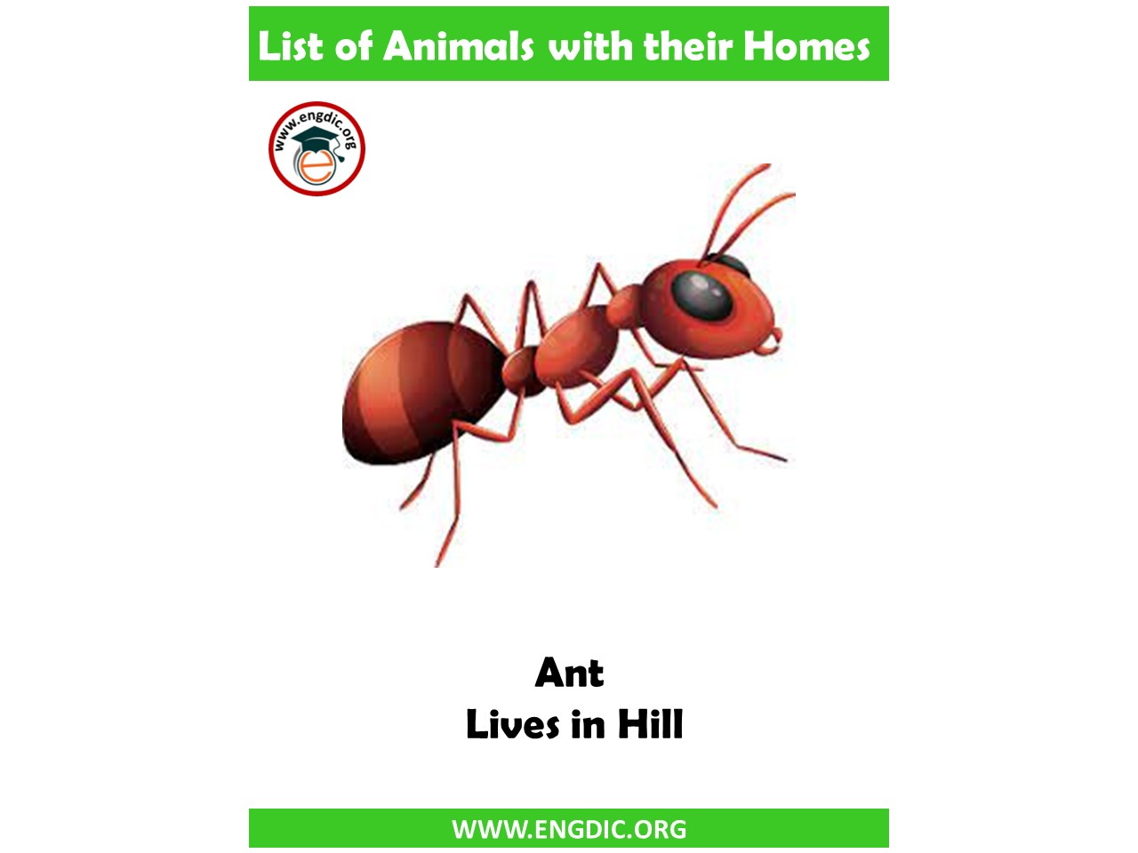 ant home name
