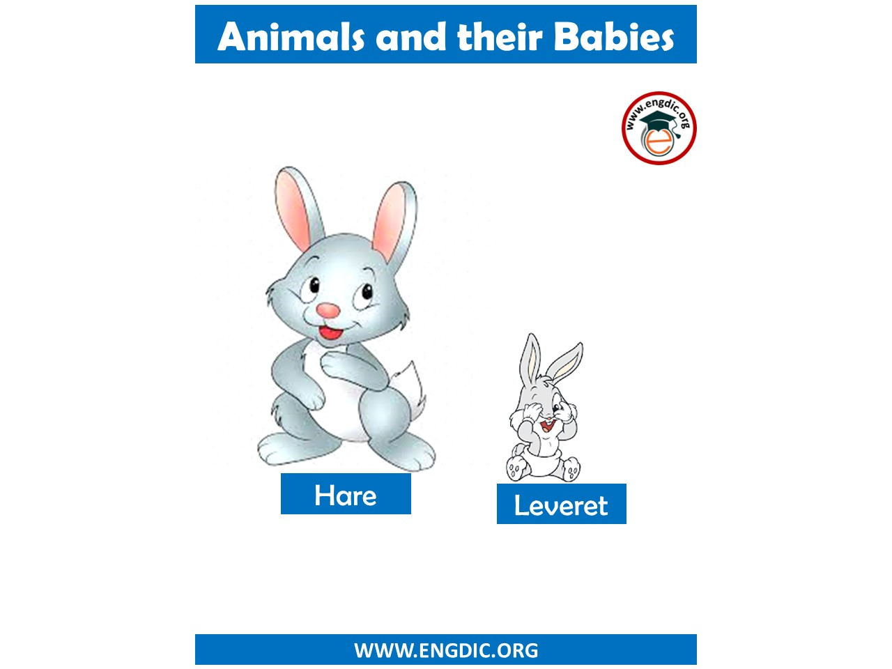 list of animal name with young