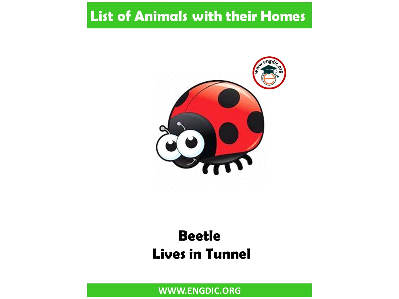 homes names of animals