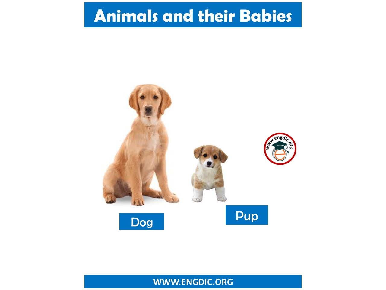 animal with baby name