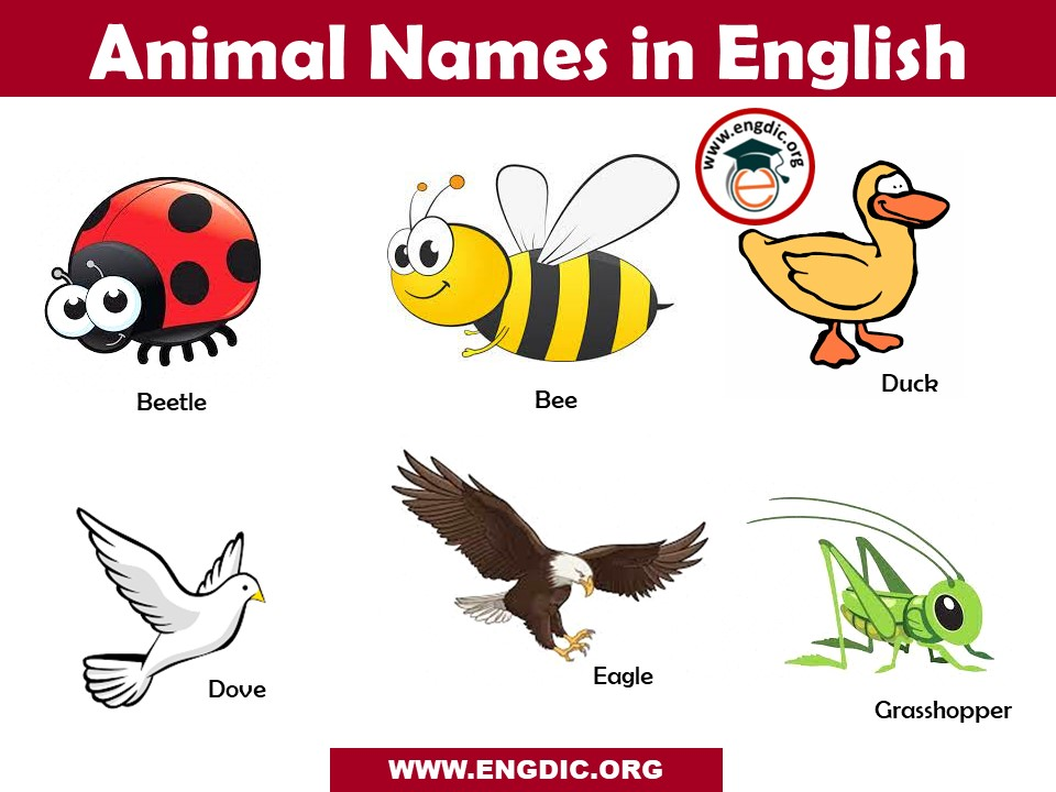 animal names in english