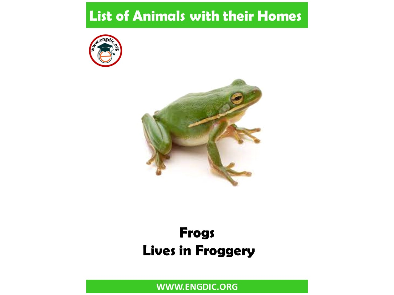 List of Animals and their Homes