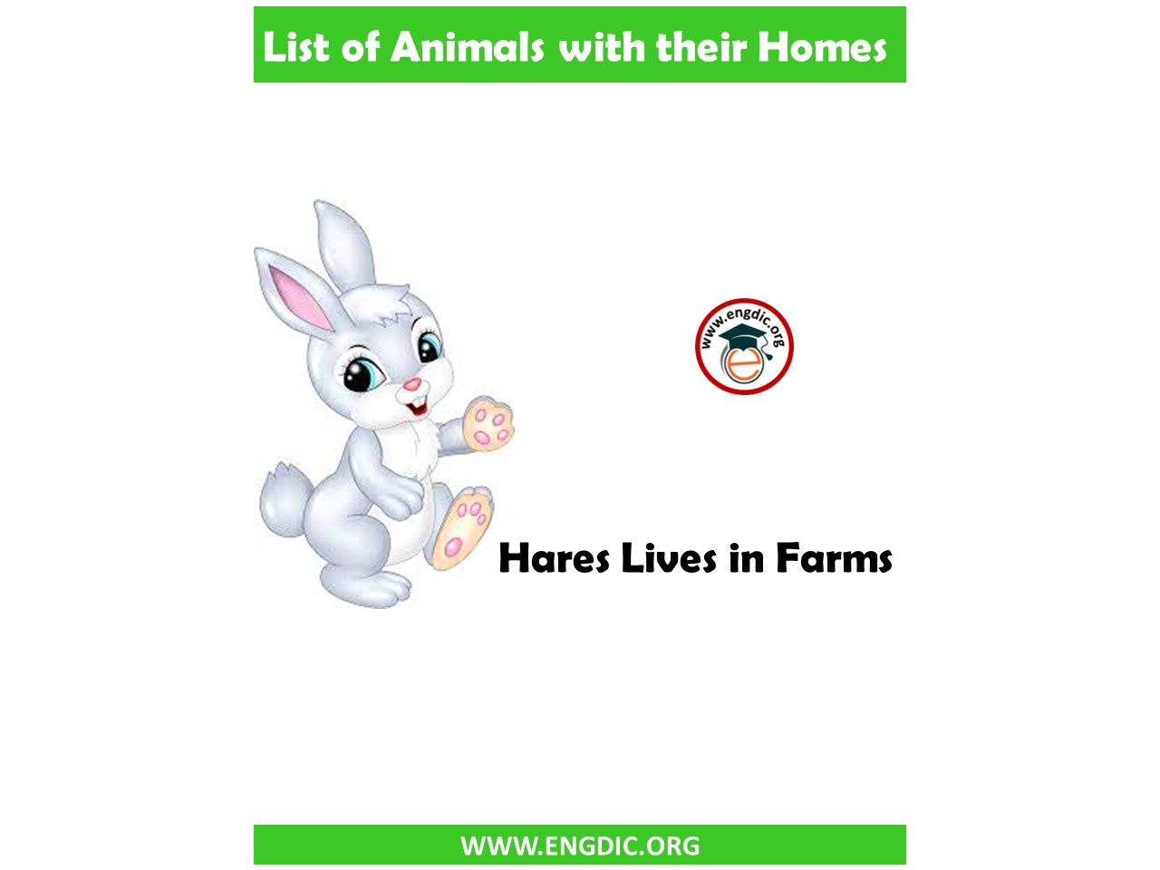 animal homes with images