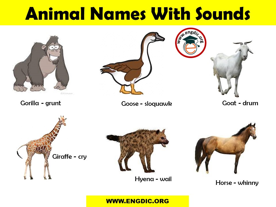 sounds of different animals