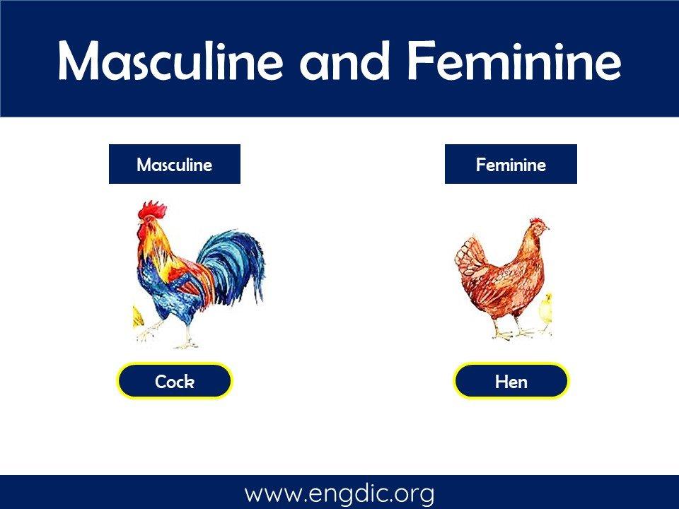 male and female masculine and feminine