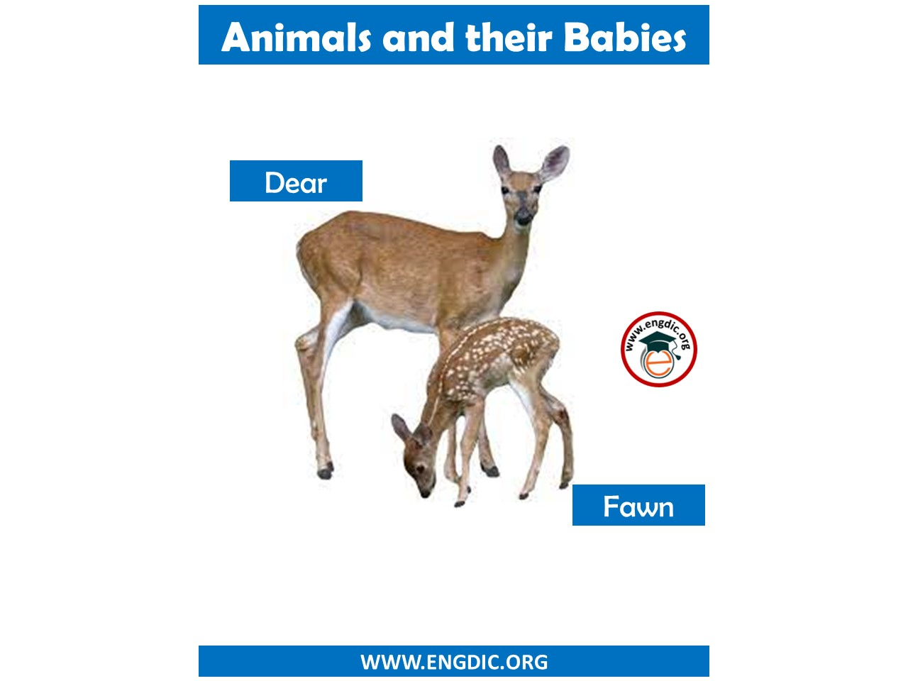 animals with their kids