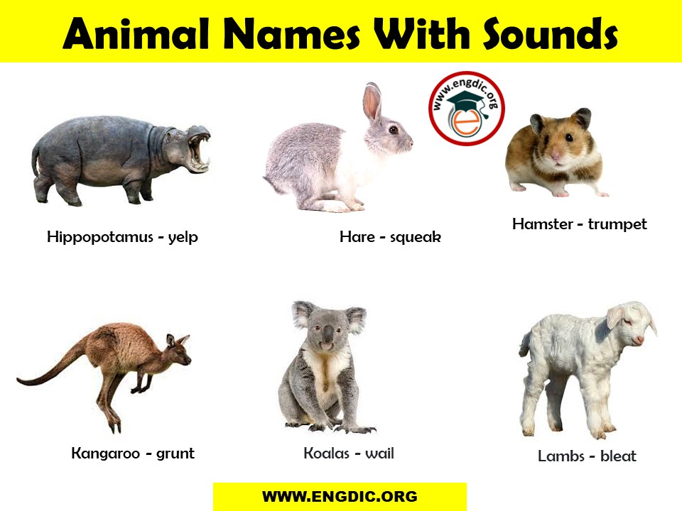 sounds of different animals pdf