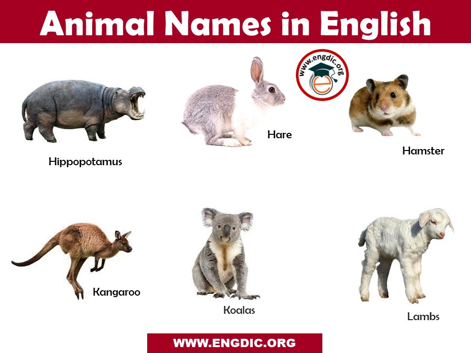 animal names with images