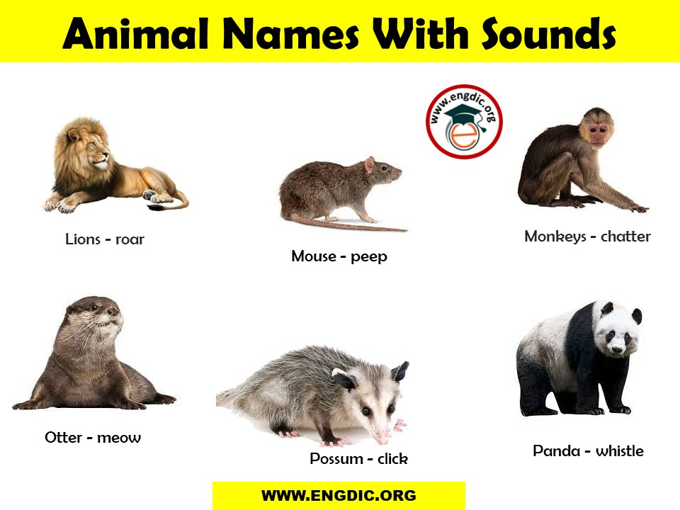 animal sounds with images