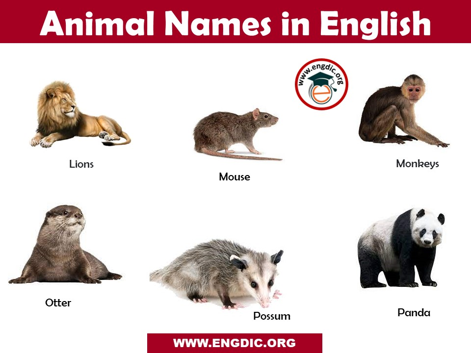 list of animal names a to z