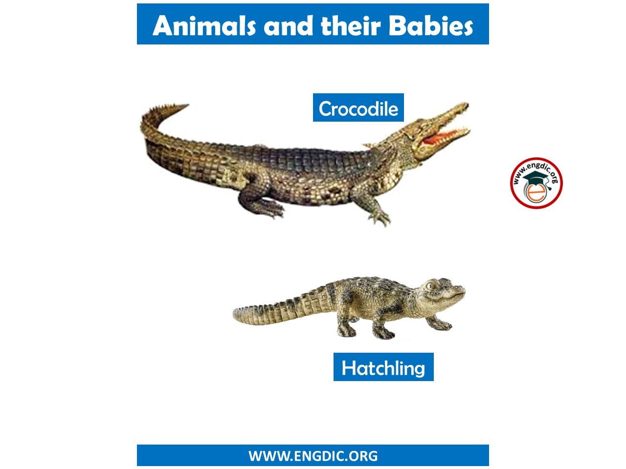 animal names with child