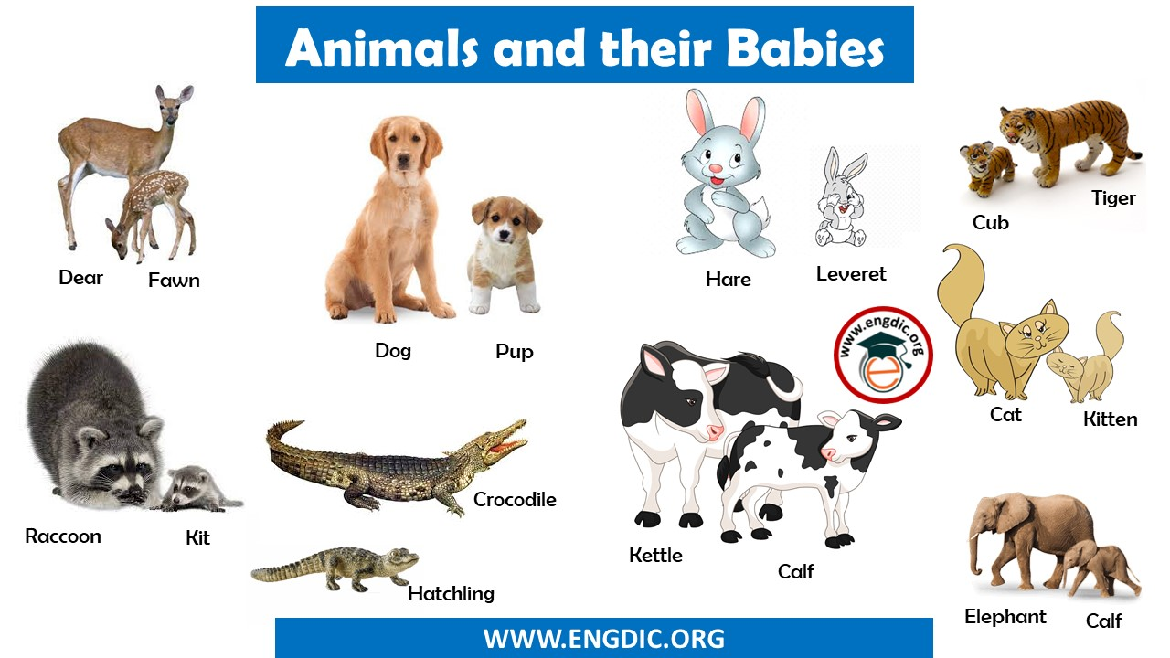 Animals and their Babies Names in English