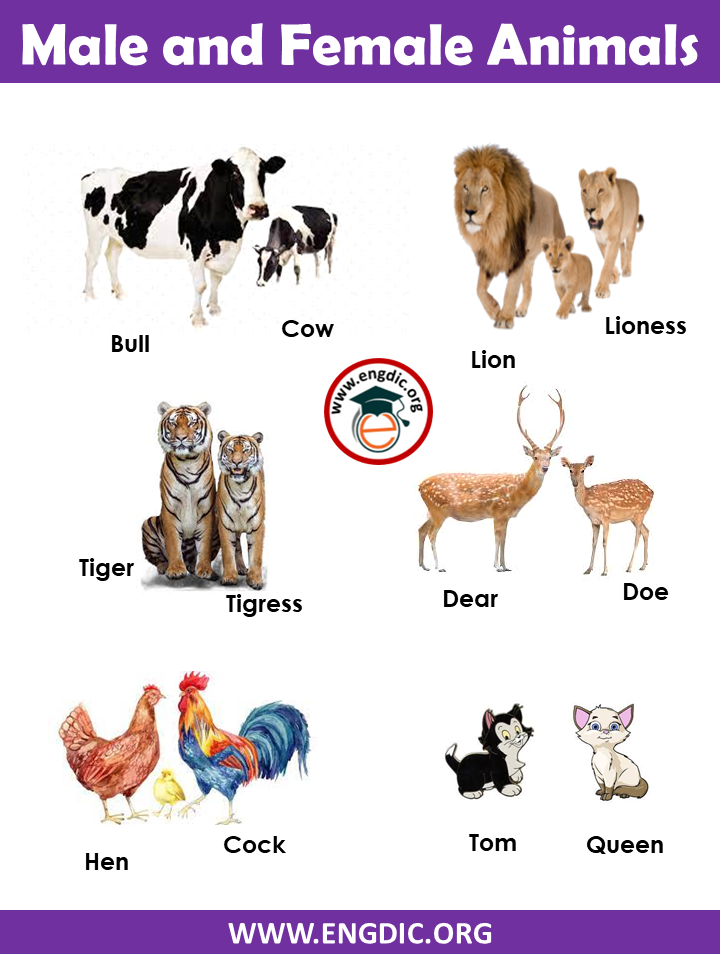 Male and Female names of Animals