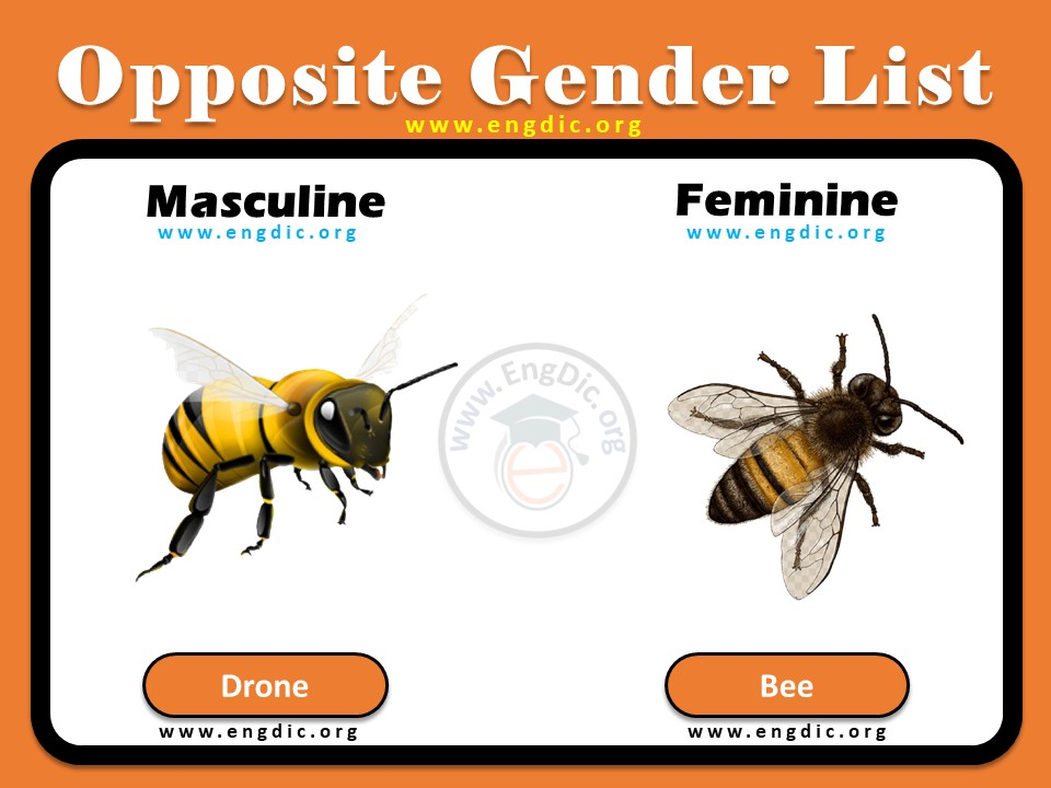 Opposite gender of drone and bee