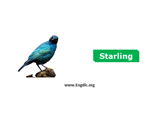 starling - birds names list with pictures