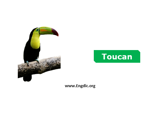 toucan - birds names list with pictures
