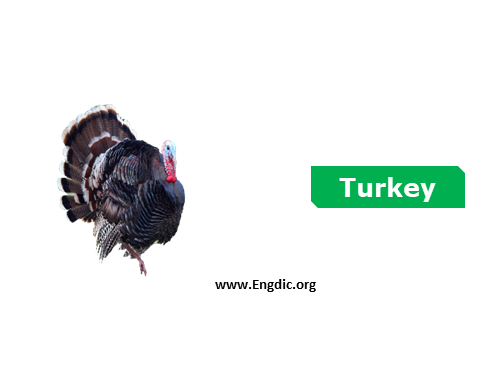 turkey - birds names list with pictures