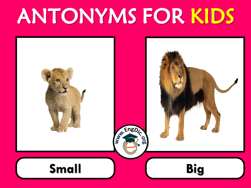 antonyms for kids with pictures
