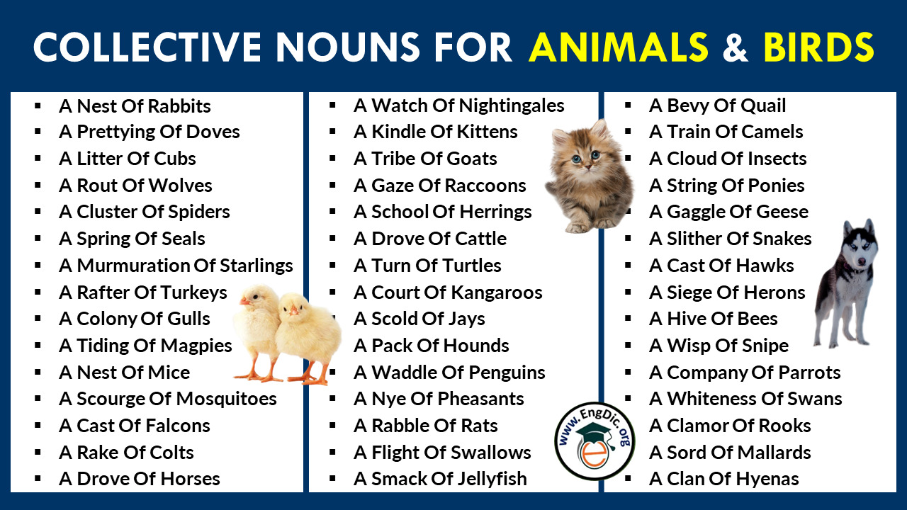 List Of Collective Nouns For Animals And Birds