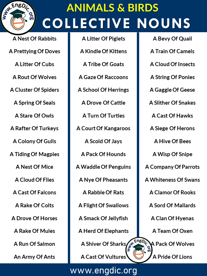 collective nouns for animals and birds