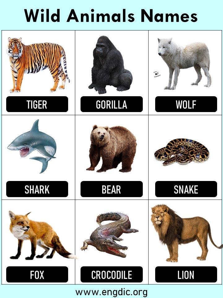 10 Wild Animals Name